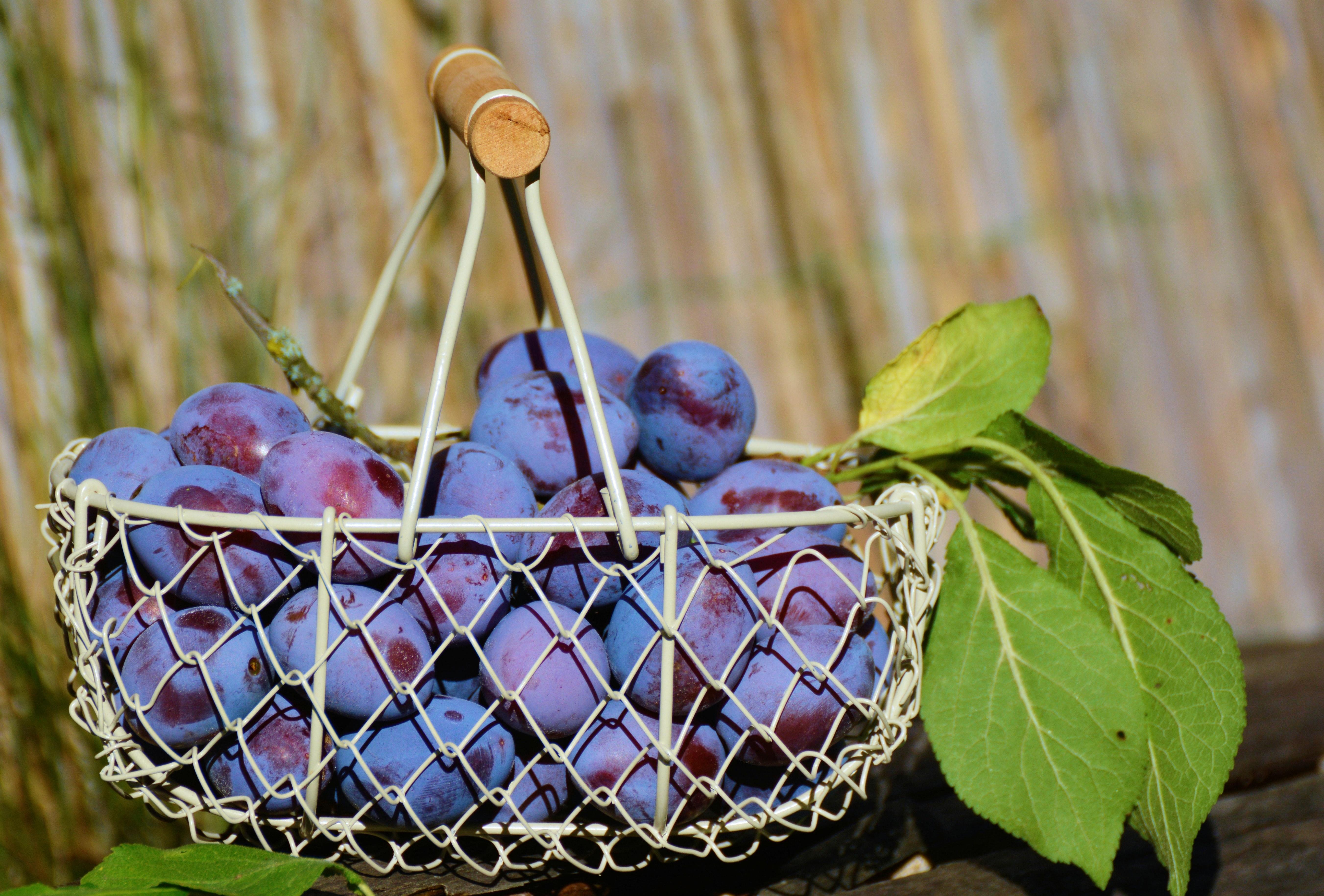 frutas_del_mes_de_junio_ciruelas