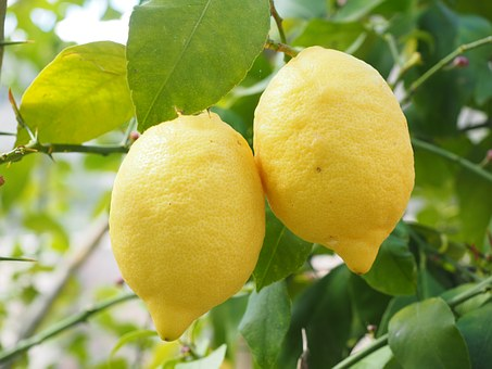 limones_noviembre
